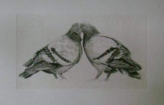 Adam Kwaśny - Gołębie